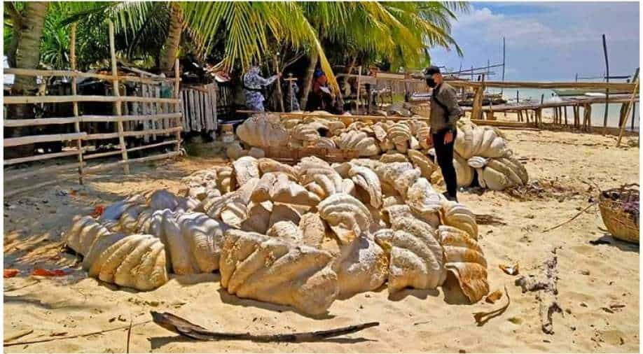 Philippines: Giant clams valued at $ 25 million were confiscated in a raid