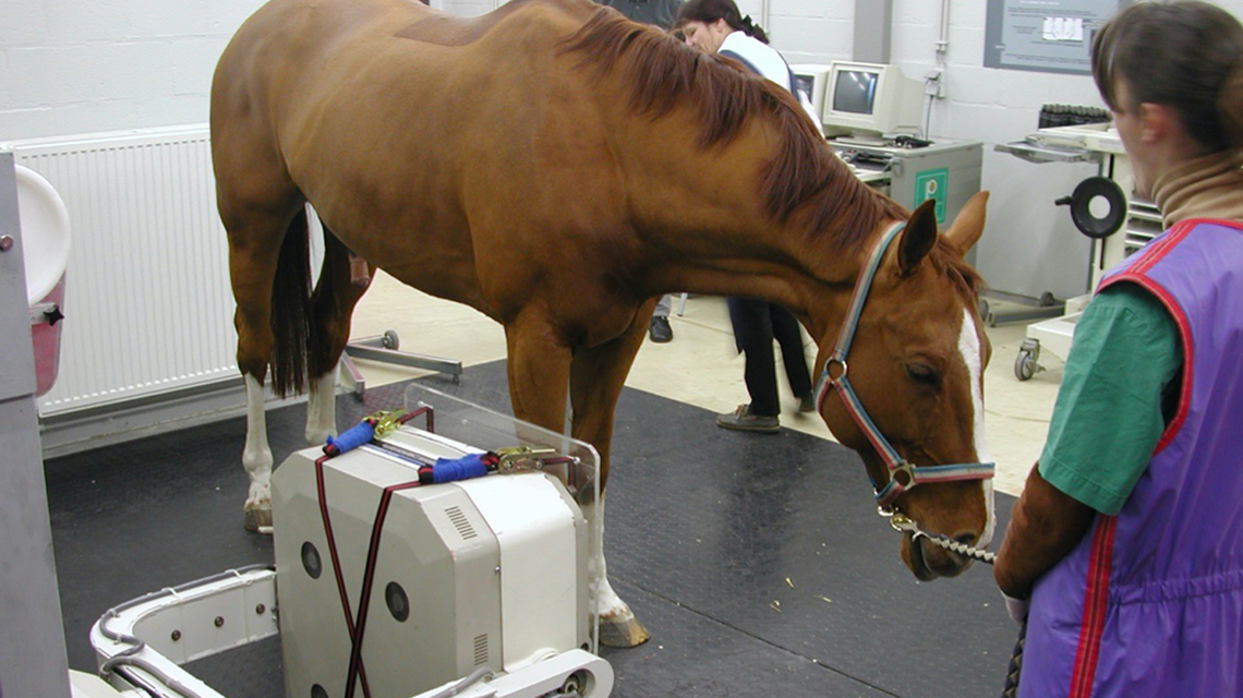 IAEA publishes new safety report for veterinarians who use radiation
