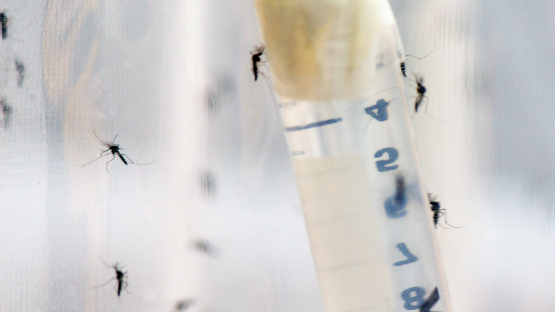 New publication highlights advances in the use of nuclear technology to control insect pests