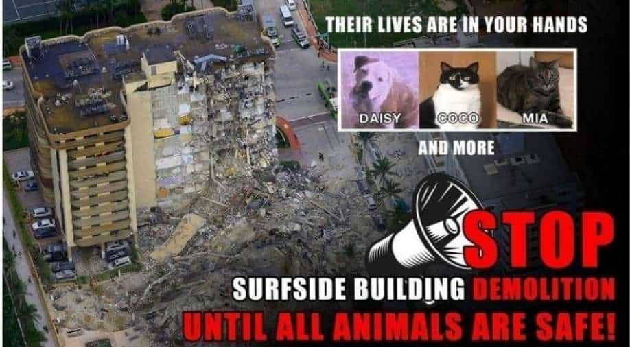"""""""A crime"""": Animal rights activists protest against demolition of a building in Florida"""