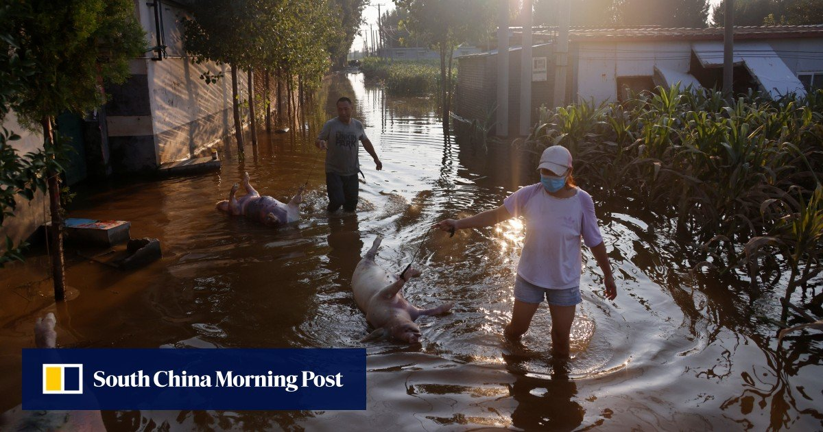 Plea for disinfectants in China as dead cattle rot after floods