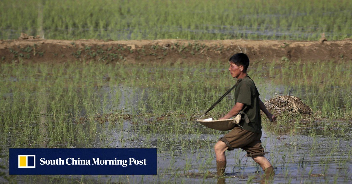 According to UN forecasts, North Korea faces a food shortage of 860,000 tons