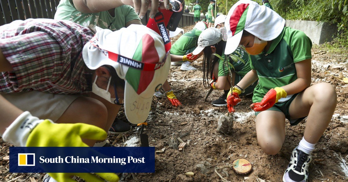 """Hong Kong children help the green group create the city's first """"tiny forest"""" to brave the heat"""