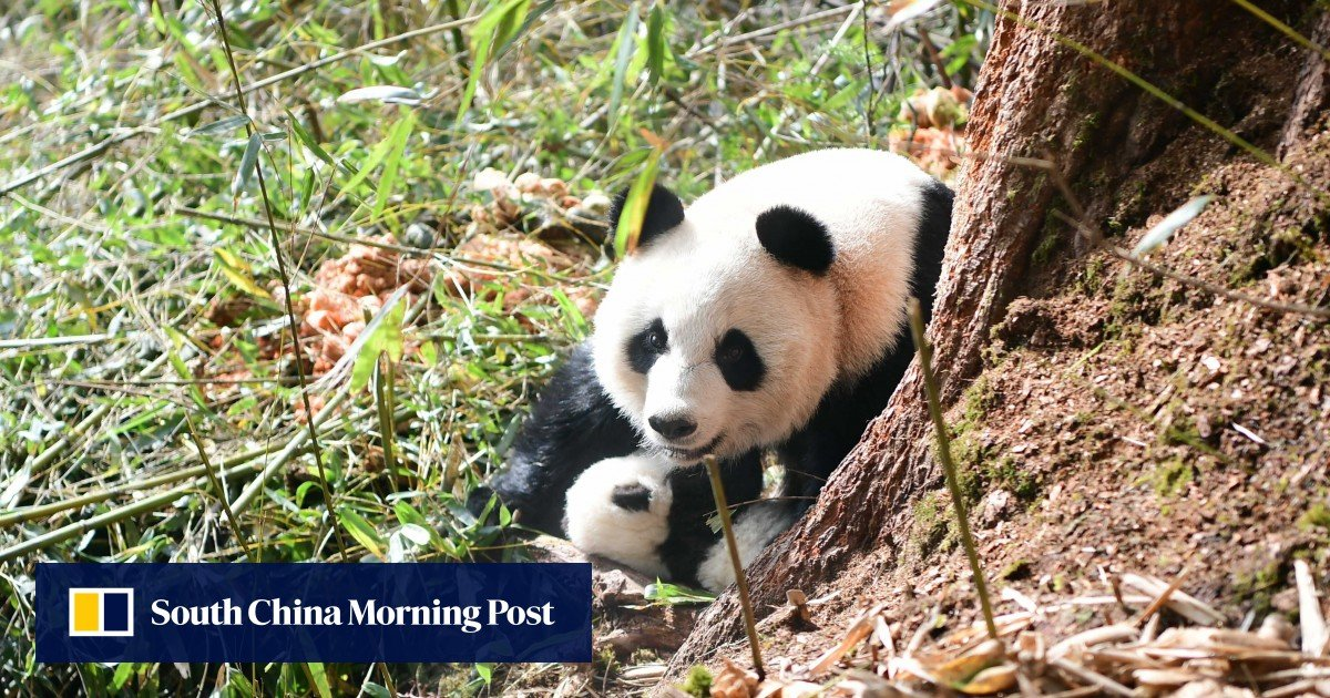 China pledges to protect nature and work with other nations ahead of the UN biodiversity summit
